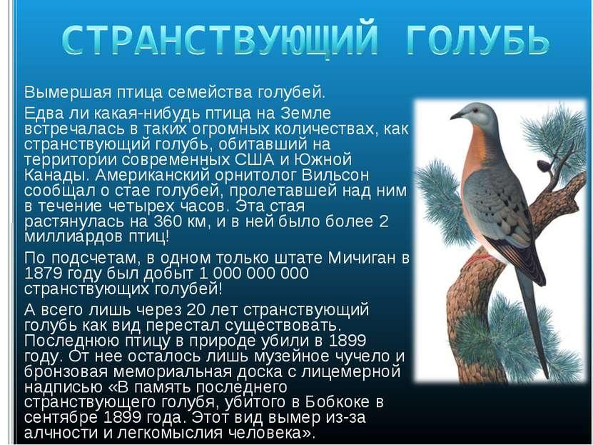 Вымершая птица семейства голубей. Едва ли какая-нибудь птица на Земле встреча...