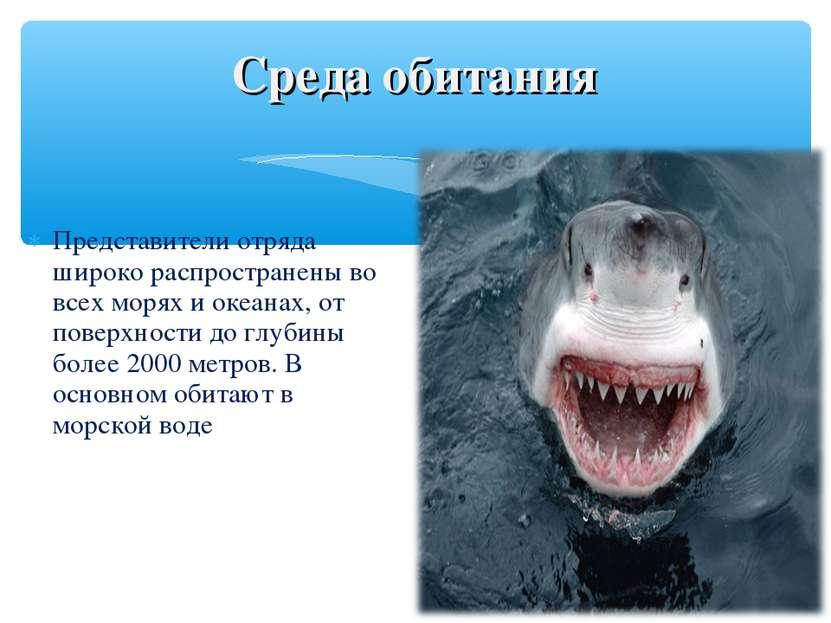 Представители отряда широко распространены во всех морях и океанах, от поверх...