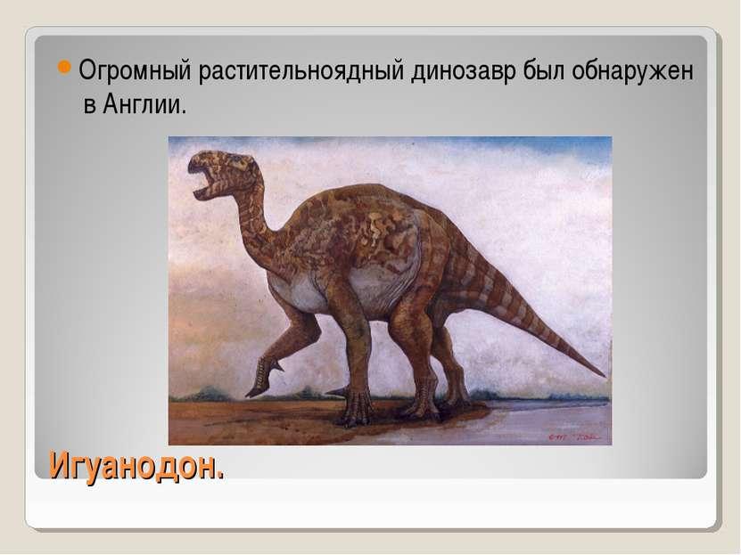 Игуанодон. Огромный растительноядный динозавр был обнаружен в Англии.