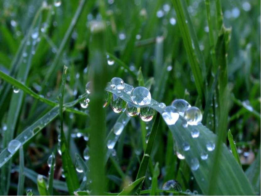 РОСА Утром бусы засверкали, Всю траву собой застлали, А пошли искать их днём,...
