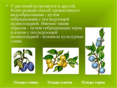 У растений встречается и другой, более редкий способ хромосомного видообразов...