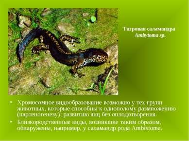 Хромосомное видообразование возможно у тех групп животных, которые способны к...