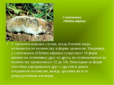 У грызунов нередки случаи, когда близкие виды отличаются по количеству и форм...
