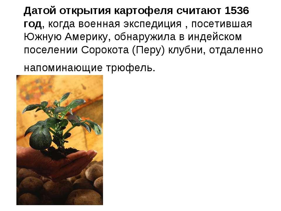 Датой открытия картофеля считают 1536 год, когда военная экспедиция , посетив...