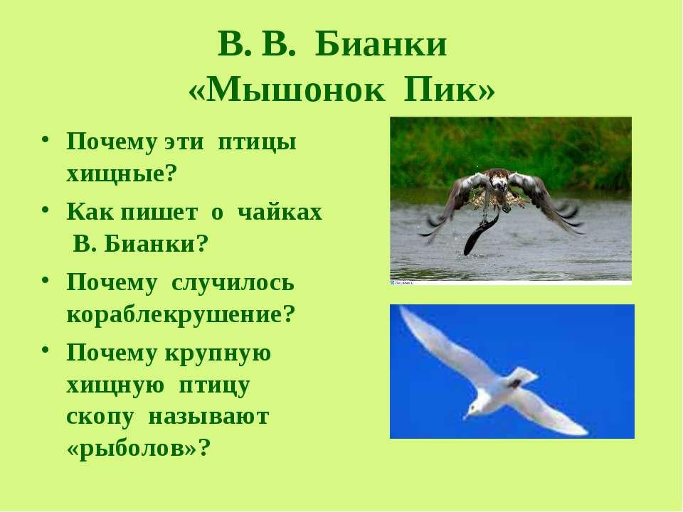 В. В. Бианки «Мышонок Пик» Почему эти птицы хищные? Как пишет о чайках В. Биа...