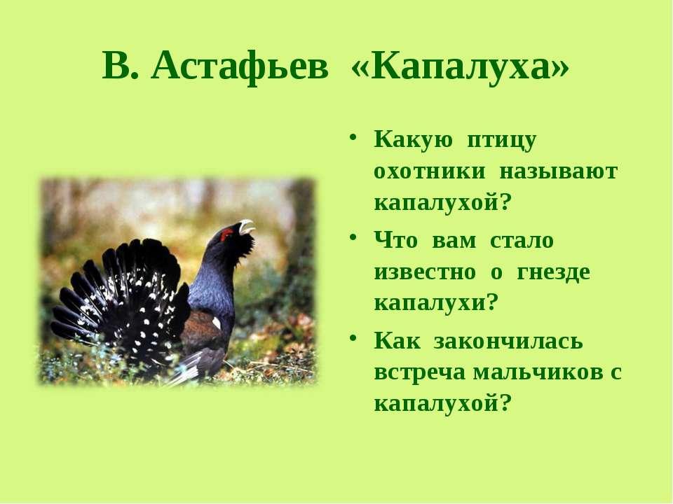В. Астафьев «Капалуха» Какую птицу охотники называют капалухой? Что вам стало...
