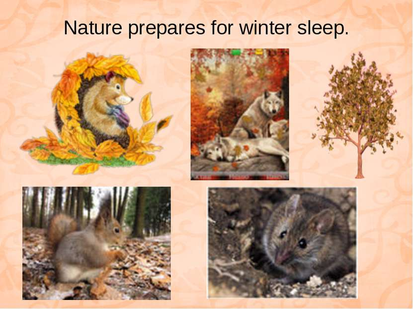 Nature prepares for winter sleep.