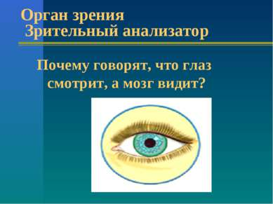 Орган зрения Зрительный анализатор Почему говорят, что глаз смотрит, а мозг в...