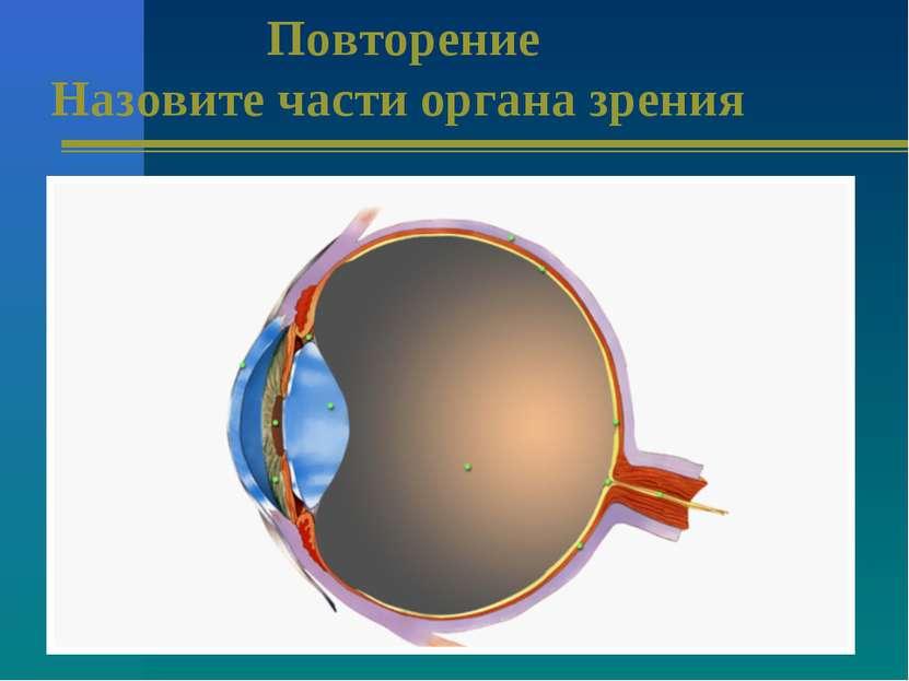Повторение Назовите части органа зрения
