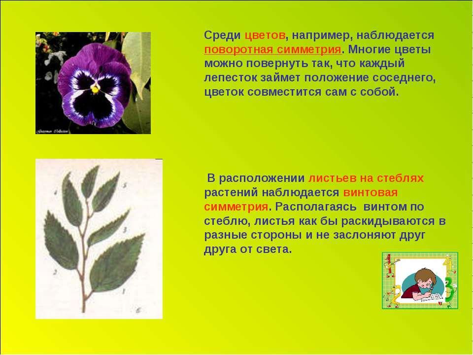 Среди цветов, например, наблюдается поворотная симметрия. Многие цветы можно ...