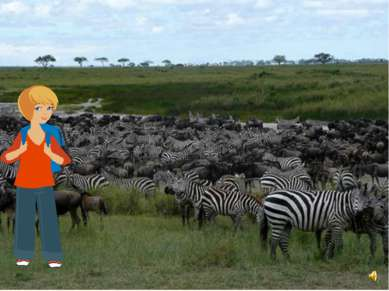 А ты знаешь, что зебры как и лошади бывают разные.