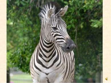 Послушай как кричит зебра