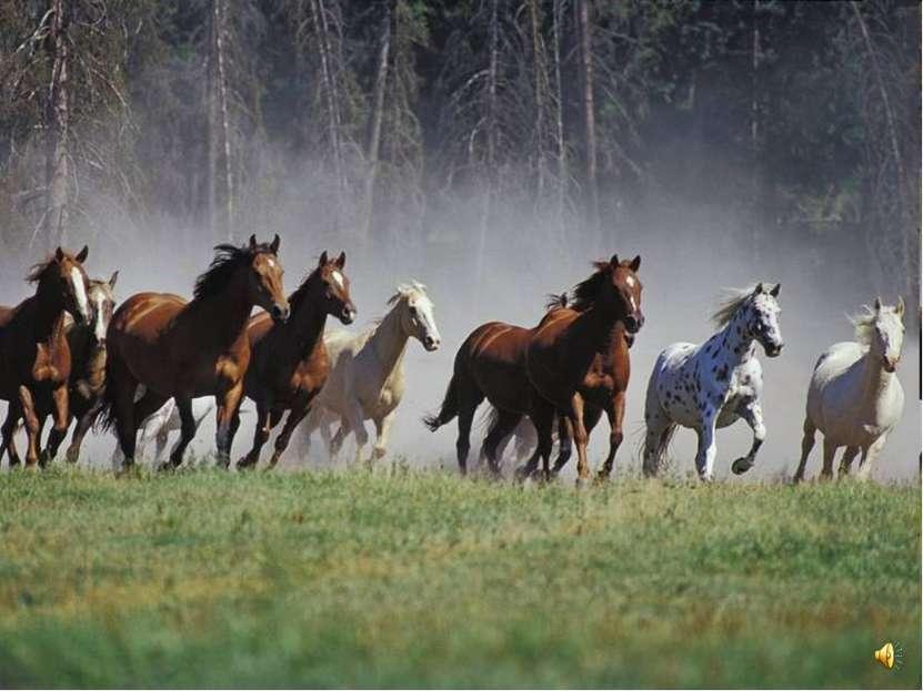 Но и постоять за себя лошади умеют. Столкнувшись с хищником, лошади пускают в...