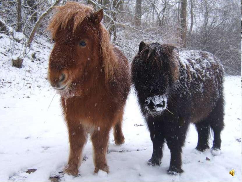 Маленьких ростом лошадок называют пони