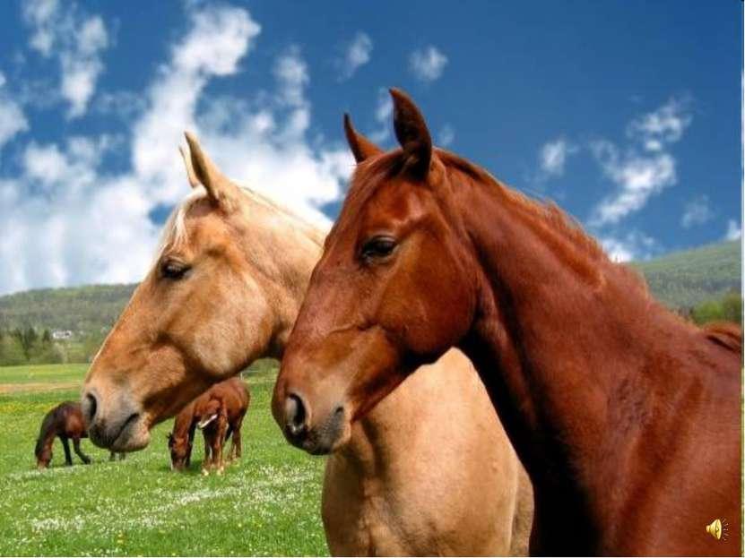 Послушай, как ржут лошади