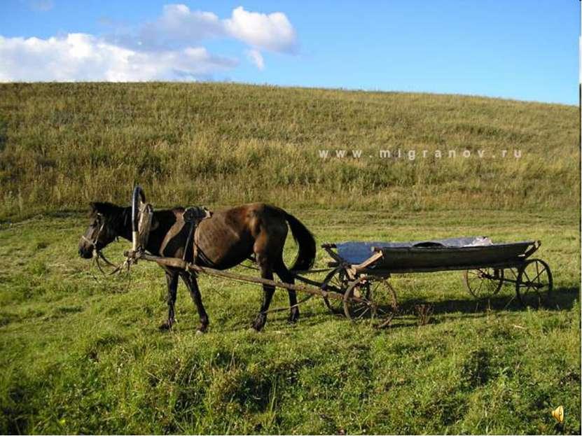 Лошади - верные помощники людям. Катание на лошадях улучшает здоровье человека.