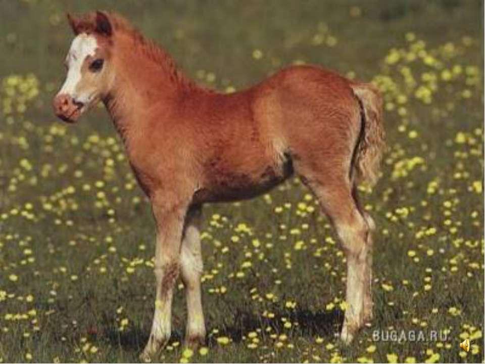 Детёныша лошади называют жеребёнком.