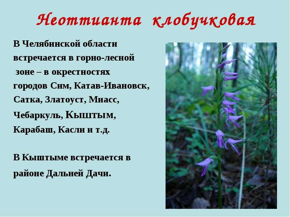 Неоттианта клобучковая В Челябинской области встречается в горно-лесной зоне ...