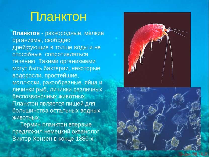 Планктон Планктон- разнородные, мелкие организмы, свободно дрейфующие в толщ...
