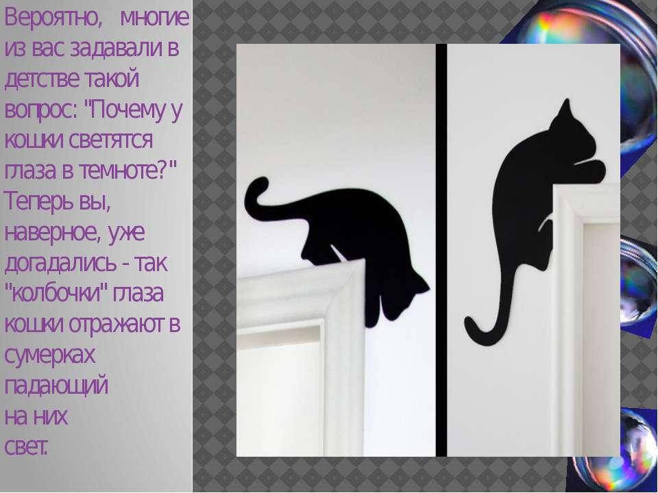 """Вероятно, многие из вас задавали в детстве такой вопрос: """"Почему у кошки свет..."""