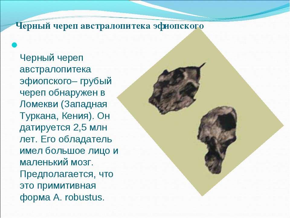 Черный череп австралопитека эфиопского– грубый череп обнаружен в Ломекви (Зап...