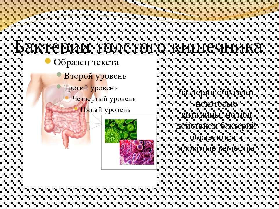 Бактерии толстого кишечника бактерии образуют некоторые витамины, но под дейс...