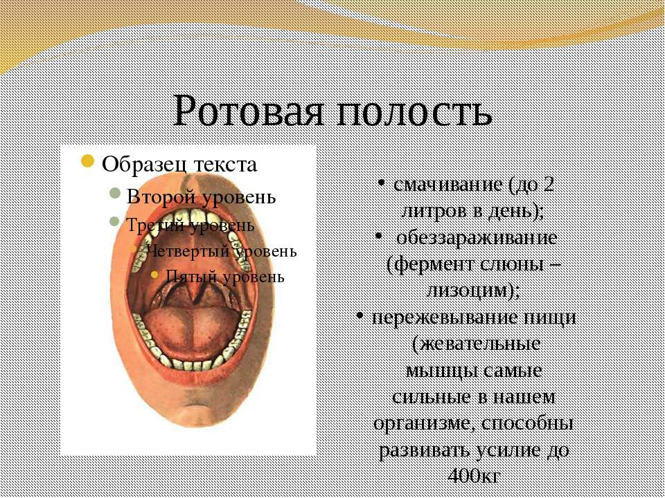 Ротовая полость смачивание (до 2 литров в день); обеззараживание (фермент слю...