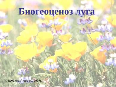 Биогеоценоз луга © Шубина Любовь, 2007г.
