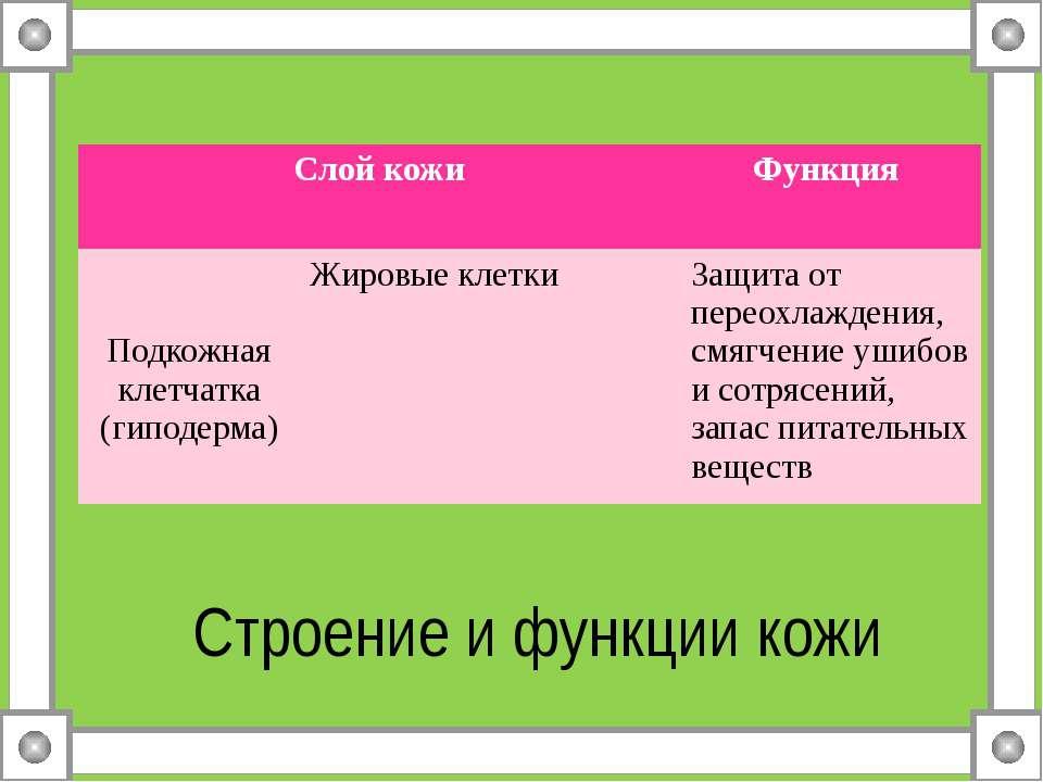Строение и функции кожи Слой кожи Функция Подкожная клетчатка (гиподерма) Жир...