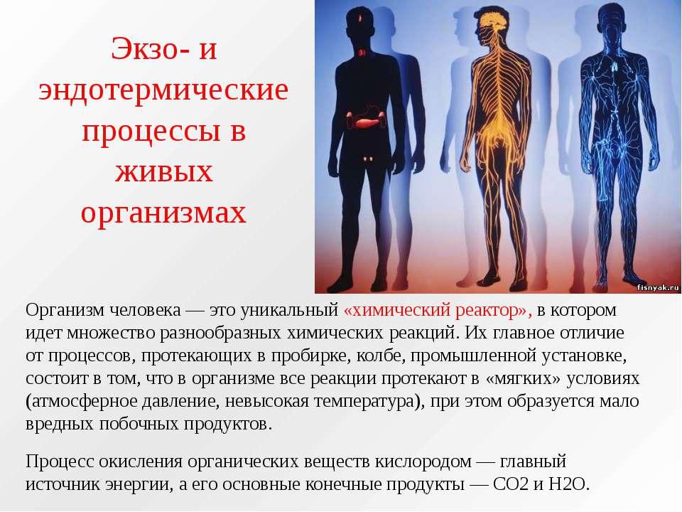 Экзо- и эндотермические процессы в живых организмах Организм человека — это у...