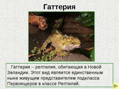 Латимерия Латимерия (целокант) – кистеперая рыба, обитающая в глубоководных у...