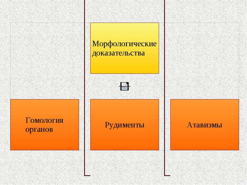 Гомология органов Гомологичные органы – это органы, имеющие сходный план стро...
