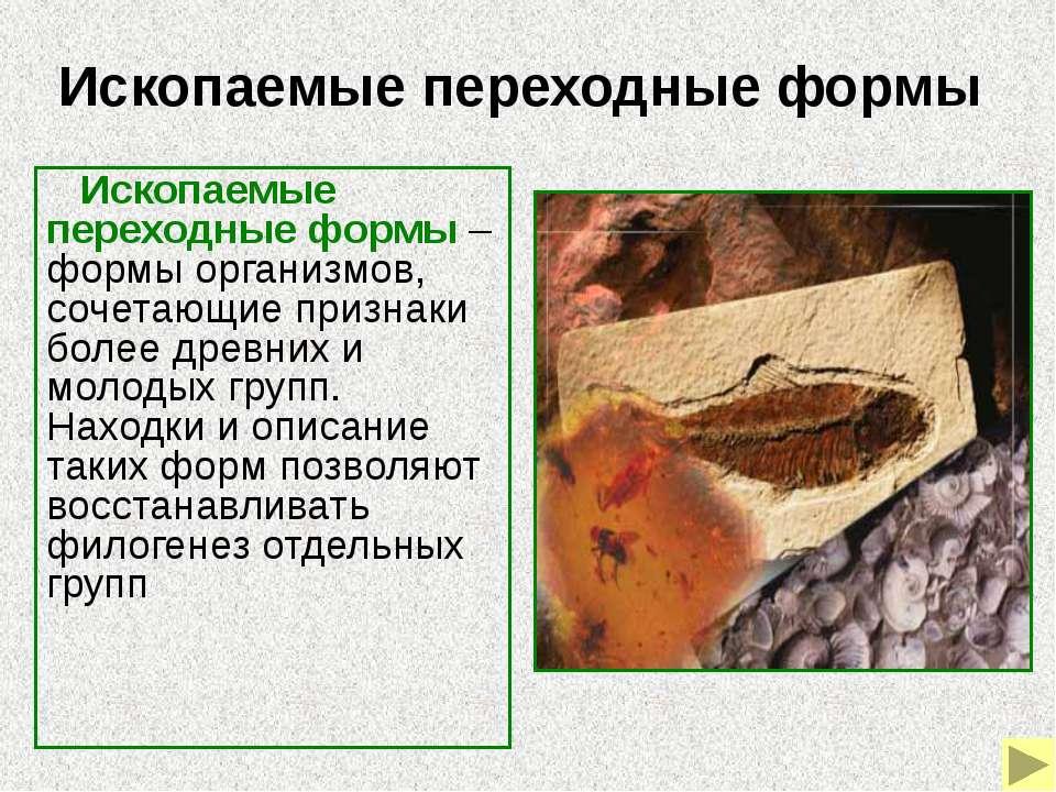 Ихтиостега Ихтиостега – ископаемая форма, которая позволяет связать рыб с наз...