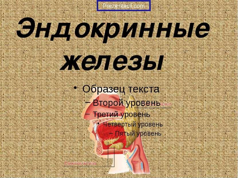 Эндокринные железы Prezentacii.com