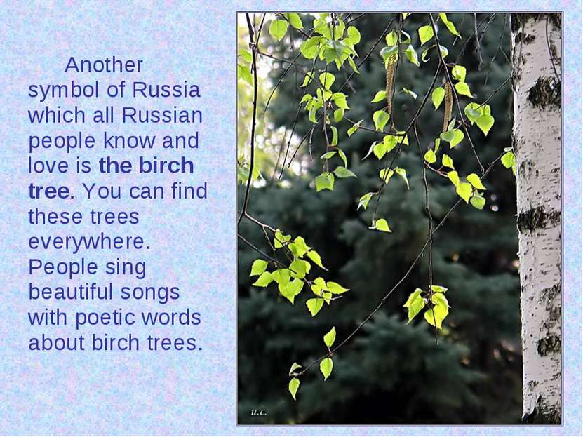 Another symbol of Russia which all Russian people know and love is the birch ...