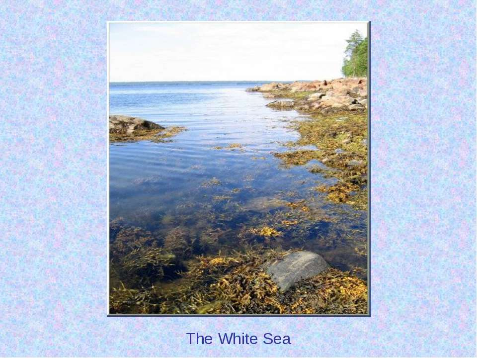 The White Sea