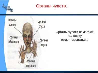 Органы чувств. Органы чувств помогают человеку ориентироваться.