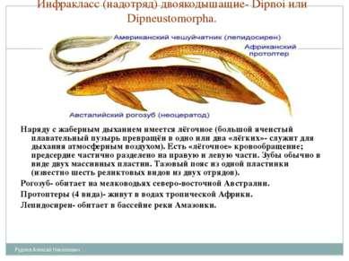 Инфракласс (надотряд) двоякодышащие- Dipnoi или Dipneustomorpha. Наряду с жаб...