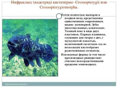 Инфракласс (надотряд) кистепёрые- Crossopterygii или Crossopterygiomorpha. По...