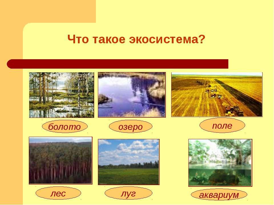 озеро болото луг лес поле аквариум Что такое экосистема?