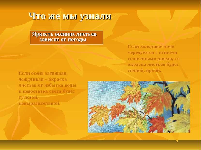 Что же мы узнали Яркость осенних листьев зависит от погоды Если осень затяжна...