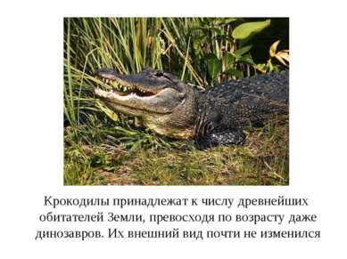Крокодилы принадлежат к числу древнейших обитателей Земли, превосходя по возр...