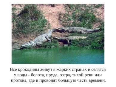 Все крокодилы живут в жарких странах и селятся у воды - болота, пруда, озера,...