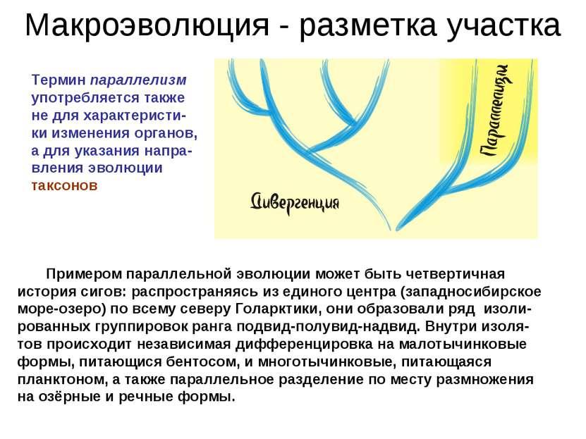 Макроэволюция - разметка участка Термин параллелизм употребляется также не дл...