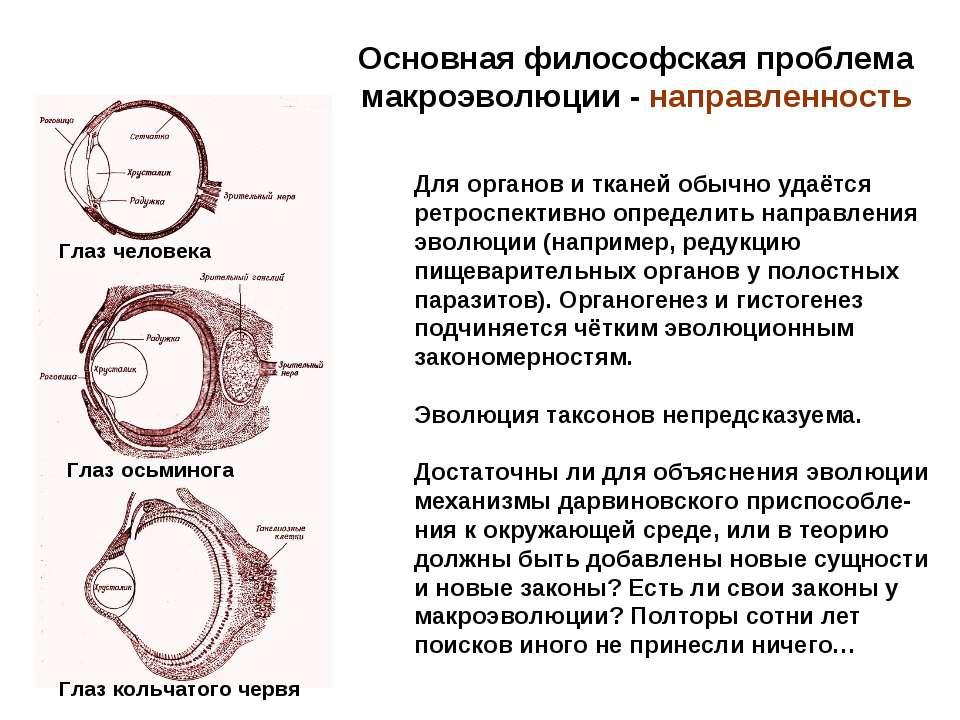 Основная философская проблема макроэволюции - направленность Для органов и тк...
