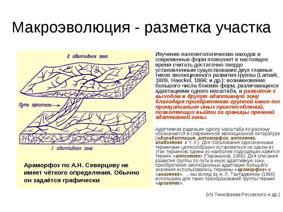 Макроэволюция - разметка участка Изучение палеонтологических находок и соврем...