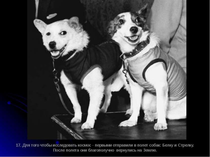 17. Для того чтобы исследовать космос - первыми отправили в полет собак: Белк...