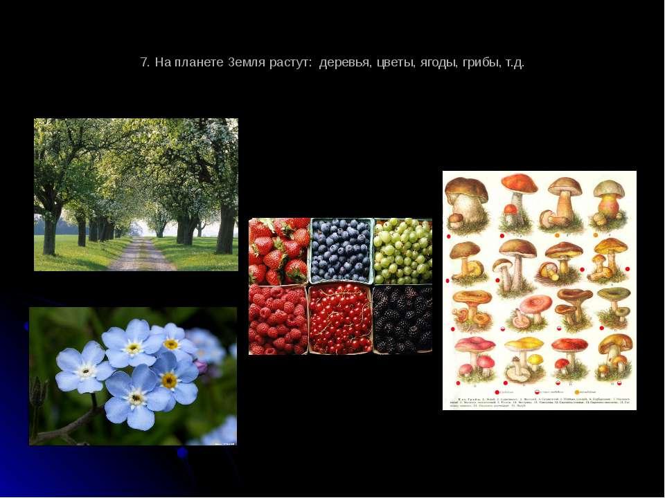 7. На планете Земля растут: деревья, цветы, ягоды, грибы, т.д.