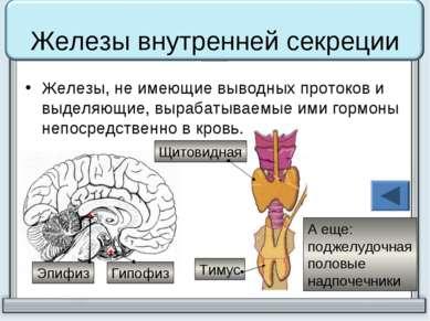 Железы внутренней секреции Железы, не имеющие выводных протоков и выделяющие,...