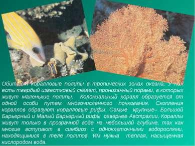 Обитают коралловые полипы в тропических зонах океана. У них есть твердый изве...